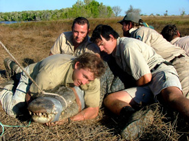 The mighty 'Kennedy' was a handful but the Croc Team had him under control.